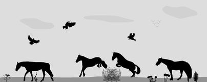 Horses Jumping, Birds Fly in Nature. Vector Stock Photography