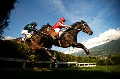 Horses jumping the obstacle. Jockeys on horses. The obstacle is a hedge. Hippodrome of Merano Maia (Tyrol), season 2009 Stock Photo