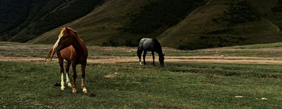 Horses of Kazbegi Stock Photo