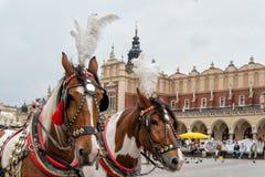 Horses in Krakow. Horses on the mainsquare of Krakow, Poland royalty free stock photography