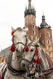 Horses in Krakow. Horses on the mainsquare of Krakow, Poland stock images