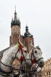 Horses in Krakow. Horses on the mainsquare of Krakow, Poland stock image