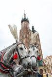Horses in Krakow Stock Photos
