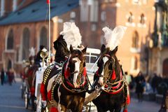 Horses in Krakow Royalty Free Stock Photography