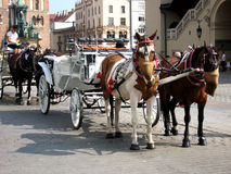 Horses in Krakow old town, Runok market square. Royalty Free Stock Photography