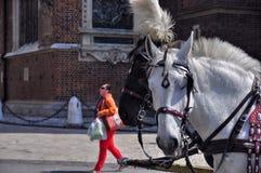 Horses Krakow Poland Royalty Free Stock Images