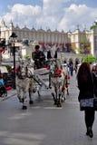 Horses Krakow Poland Royalty Free Stock Photography