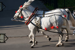 Horses Krakow Poland Royalty Free Stock Image
