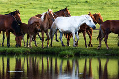 Horses by lake Royalty Free Stock Photos