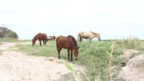 Horses at the lake stock video footage