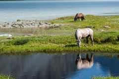 Horses by the lake. Trekking in the Altai Mountains Stock Photo