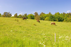Horses and landscape Stock Photography