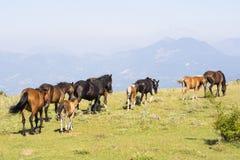 Horses Landscape Pollino Stock Photo