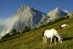 Horses and landslide Royalty Free Stock Images