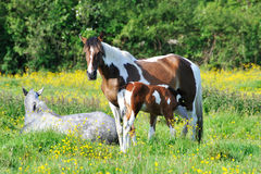 Horses on the lawn Royalty Free Stock Photos