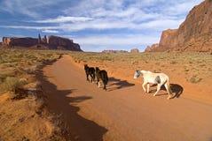 Horses leaving Monument Valley. Horses walking in Monument Valley, Navajo tribal park, Utah royalty free stock image