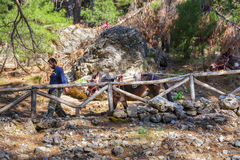 Horses led by a guide are used to transport tired tourists in Samaria Gorge in central Crete Royalty Free Stock Photos