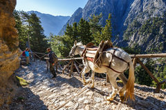 Horses led by a guide, are used to transport tired tourists in Samaria Gorge Royalty Free Stock Photos