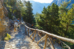 Horses led by a guide, are used to transport tired tourists in Samaria Gorge Royalty Free Stock Photo