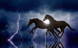 Horses and lightnings Stock Photo
