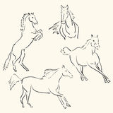 Horses line art. Abstract drawing Stock Image