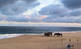 Horses in Los Cabos Mexico Royalty Free Stock Image