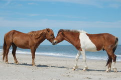 Horses in love Stock Photos