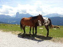 Horses in love in Resciesa mountain Royalty Free Stock Images