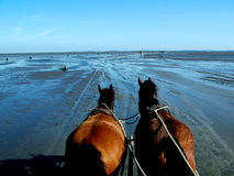 Horses and low tide Royalty Free Stock Images