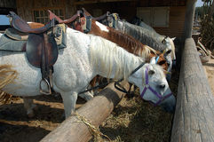 Horses at lunch Royalty Free Stock Images