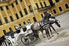 Horses and luxurious carriage Stock Photography