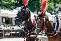 Horses on the main square of Krakow stock image