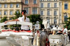 Horses on the main square of Krakow Stock Photo