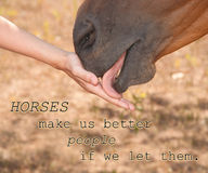 Horses make us better people if we let them - quote with an image of a horse Royalty Free Stock Image
