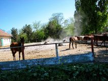 Horses. Mangalia horses in their own environment Stock Images