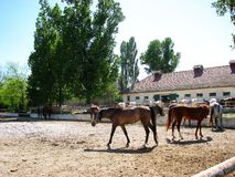 Horses. Mangalia horses in their own environment Royalty Free Stock Image