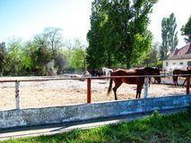 Horses. Mangalia horses in their own environment Royalty Free Stock Photos