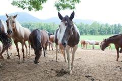 Horses. Many beauty horses on mountains background stock images