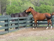 Horses of many colors are lovely animals. These are photos of different breeds of horses and thus different shades of brown, black or multicolored stock photo