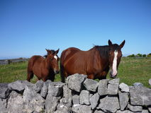 Horses. A mare with a foal, Inis Mór, Ireland royalty free stock photo