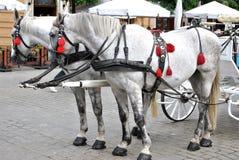 Horses on the market Royalty Free Stock Photo