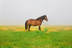 Horses in a meadow Royalty Free Stock Photos