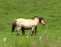 Horses in a meadow. What will he talk about with two horses in a meadow? photographs Stock Photography