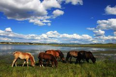 Horses on the meadow Royalty Free Stock Photos