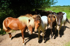 Horses in the meadow. Horses standing in a sunny meadow under a blue sky in summer Stock Photo