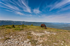 Horses on the meadow. Beautiful stallions on the green meadow, with deep blue sky Royalty Free Stock Photos