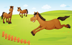 Horses on meadow Royalty Free Stock Images