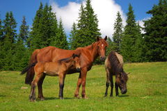 Horses on a meadow. They are graze Stock Photo