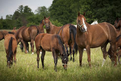 Horses in a meadow Stock Photo