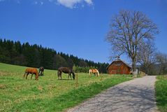Horses,  meadow, cottage Royalty Free Stock Photography